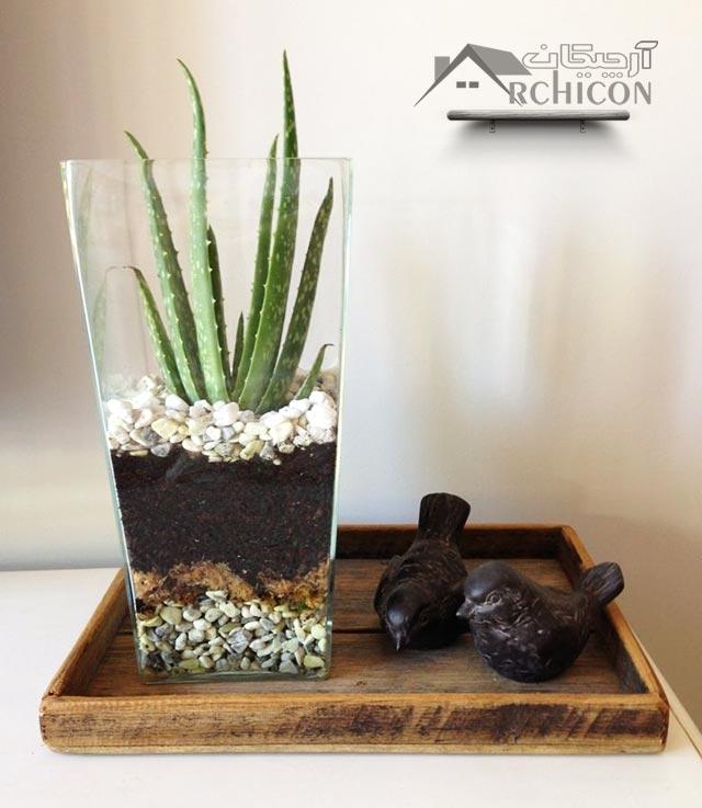 گیاهان آپارتمانی اتاق خواب